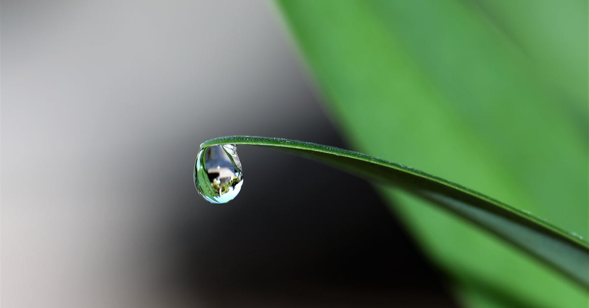 A drop of water on a sunny day